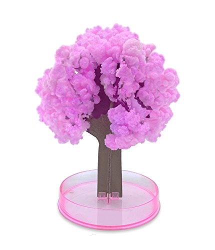 Legenden Árbol Sakura Mágico - DIY Hazlo Crecer en 24h - Cereza Japonesa