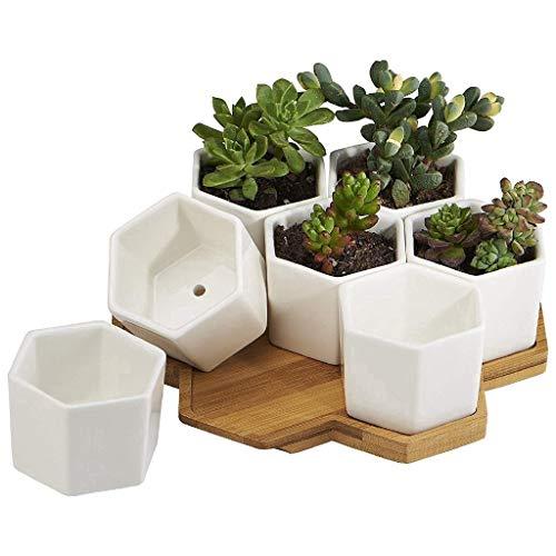 First Park, Piccoli vasetti in Ceramica per Fiori, Piante grasse e Cacti, Bianchi, di Forma Esagonale, con Vassoio in bambù