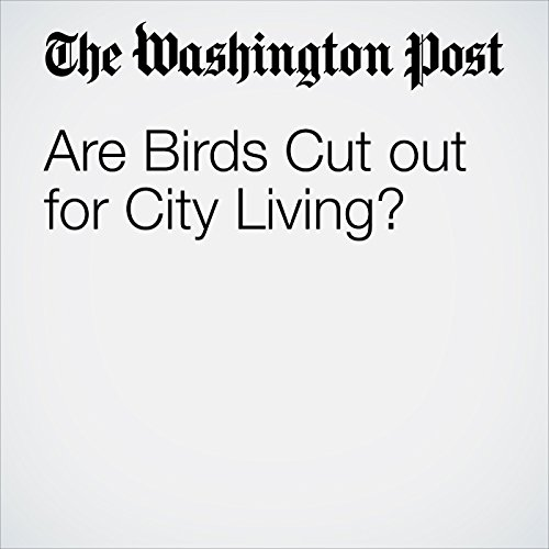 Are Birds Cut Out for City Living? copertina