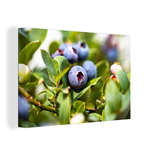 Canvas Schilderijen - Close-up van een bes aan een blauwe bessenstruik - 150x100 cm - Wanddecoratie - canvas met 2cm dik frame