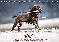 Elvis ein Engl. Cocker Spaniel wird Gross (Tischkalender 2022 DIN A5 quer): Monatskalender, Jahreskalender, Kalender (Monatskalender, 14 Seiten )