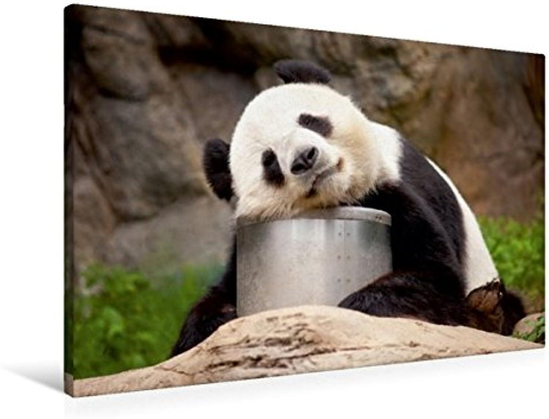 Calvendo Premium Textil-Leinwand 90 cm x 60 cm quer, Groer Panda schlft   Wandbild, Bild auf Keilrahmen, Fertigbild auf echter Leinwand, Leinwanddruck Orte Orte