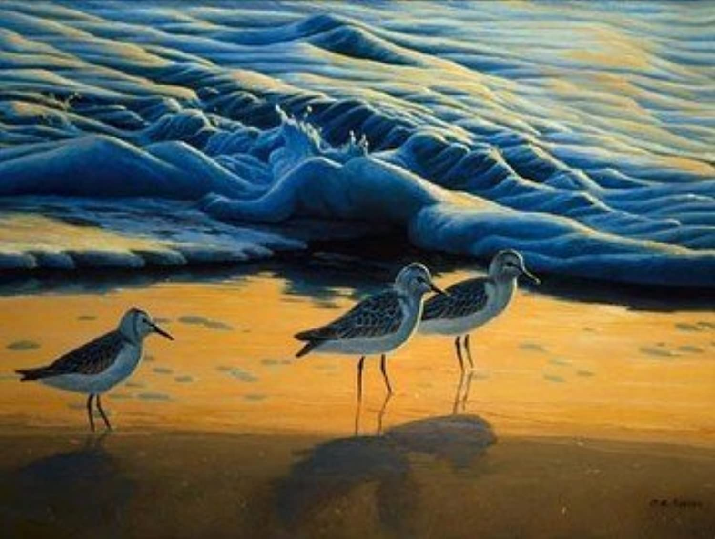 barato Shore Birds 500 Pcs Pcs Pcs SOI28620 by SunsOut by Sunsout  mejor oferta
