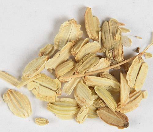 Engelwurz Angelica archangelica 800 Samen