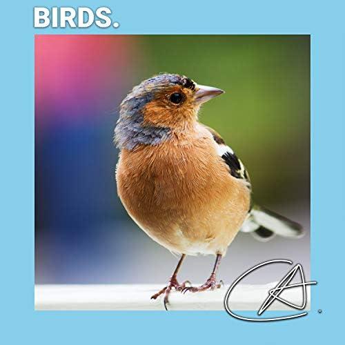 Calm Bird Sounds, Nature Sounds & Calming Bird Sounds