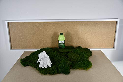 DIY Moosbild 100% Flachmoos, Moosbild selber Machen, Wandbild selber kleben, Do it Yourself Set Moos kleben Wanddeko selbst herstellen (Weiß, 140x40 cm)