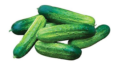 Burpee Pick-A-Bushel Pickling Cucumber Seeds 30 seeds