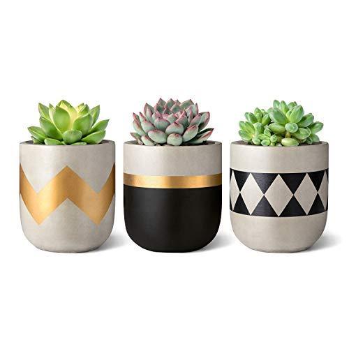 Mkouo 7.6cm Cemento Planta suculenta Set of 3 Macetas de hormigón Modern Flower Pots Indoor for Cactus Herb Plants Home Decor Gift Idea (Plantas NO Incluidas)