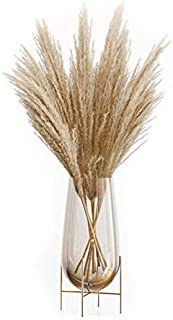 """OMME Dried Pampas Grass Phragmites Large Natural (Tan, 17.7""""/45cm)"""