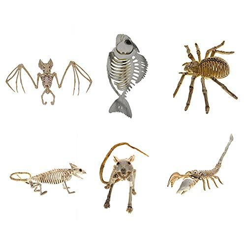 Modelos Y Materiales Educativos Médicos Suministros Y Consumibles Examen Médicos Scientific Modelo Anatómico Humano Esqueleto Clásico De Tamaño Natural sobre 6 Piezas