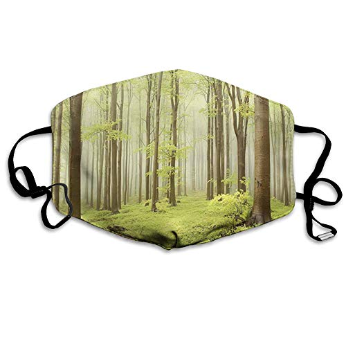 Dustproof Windproof Face Mask,Washable Cloth,Face Cover,Cover for Dust Adult Misty Spring Beech Forest in The Mountains of Central
