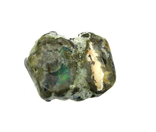 Amaryllis Trommelstein Opal Honduras 15-20 mm
