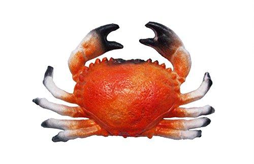 La vida media de luz: de cangrejo medio - hueca de luz de plástico, la vida de los fondos de la educación, falso de foof, de decoración, idea de regalo