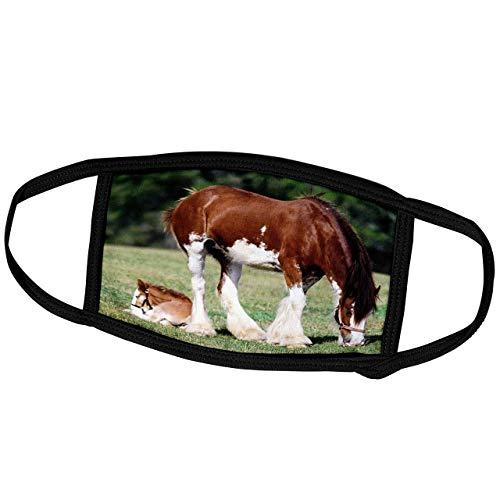 Promini Monatsmaske - Florene Tiere - Clydesdale Stute und Fohlen Pferde - Staubmaske Outdoor Schutzmaske