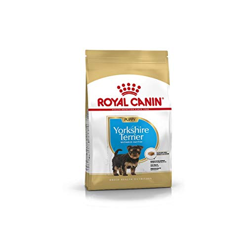 Royal Canin 35117 Breed Yorkshire Terrier Junior/puppy 500 g - Hundefutter, Verpackung kann variieren