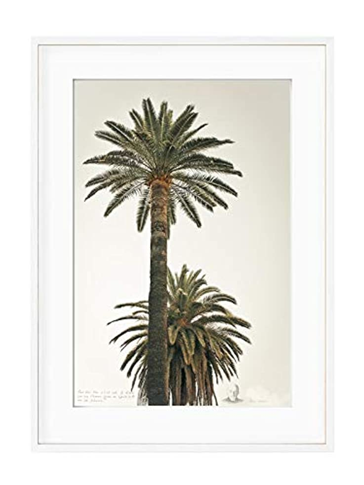 Large Palm Trees, White Varnished Wood Frame, with Mount, Multicolored, 40x50