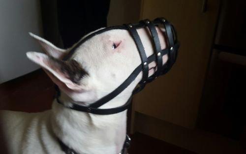 Maulkorb für Bullterrier und andere Rassen, leichtes Leder