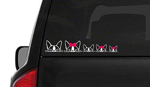 Peeking Boston Terrier Family (F21) Vinyl Decal Sticker Car/Truck Laptop/Netbook Window