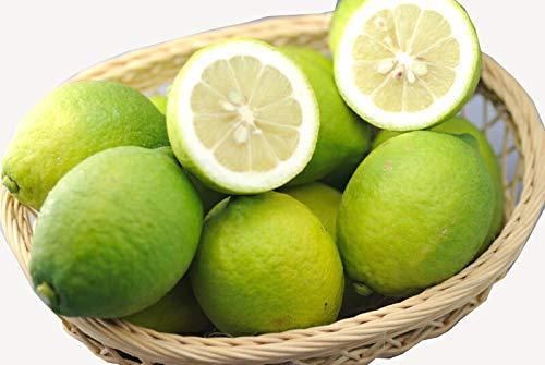【訳あり】減農薬 愛媛産 レモン 5kg 家庭用 国産 産地直送 ore
