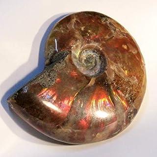 アンモナイト 化石 置物 古代 化石 開運 インテリア 古生物 fossil 原石 Ammonite アンモライト レインボー アンモン貝 一点物 天然石 パワーストーン a20096