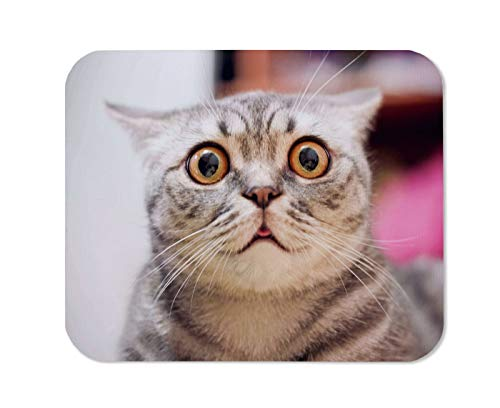 Yeuss Funny Cat Mouse Pad Rectangular Non-Slip Mousepad, Young Crazy Surprised Cat Makes Big Eyes Close-Up American Shorthair Surprised Cat Or Kitten Funny Face Big Eyes Gray Pink,200mm x 240mm