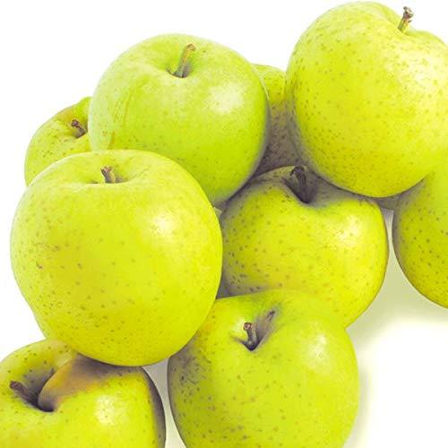 国華園 食品 山形産 王林 10�s 1箱 りんご
