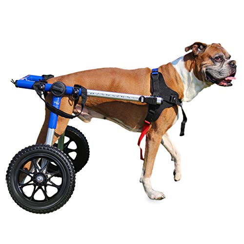 Walkin' Wheels Dog Wheelchair - for Med/Large Dogs 50-69 Pounds - Veterinarian Approved - Dog...