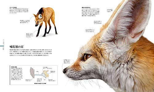 ZOOLOGY図鑑動物の世界