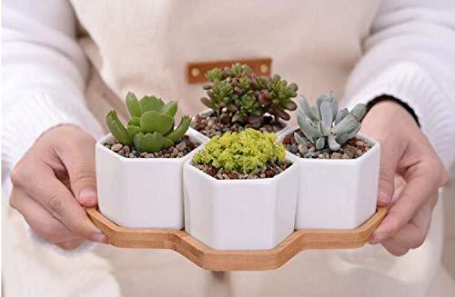 LLYU Pots en céramique, 4 plantes en pot/plantes de cactus de conception simple et blanche, pots en pot et plateaux/conteneurs en bambou
