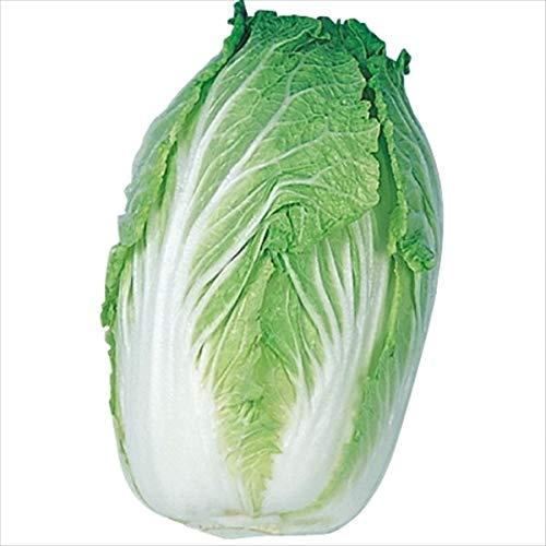 国華園 種 野菜たね ハクサイ 加賀結球白菜 1袋(5ml)/メール便配送