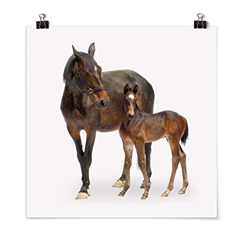 Bilderwelten Poster Imprimé Trakehner Mare & Foal Carré Fini satiné Autocollant 50 x 50cm