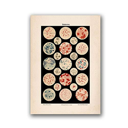 kldfig Microbiología Bacterias Microbio Lámina Antigua Cartel Ciencia Ciencia Arte de la Pared Lienzo Pintura Imagen Biología Estudio Decoración Vintage- 50x70cm sin Marco