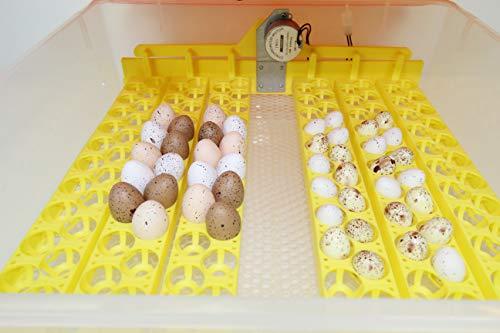 Campo24 Motorbrüter autom Wendung Brutapparat, Inkubator, für bis zu 112 Eier Inkubator (Berta 56) - 5