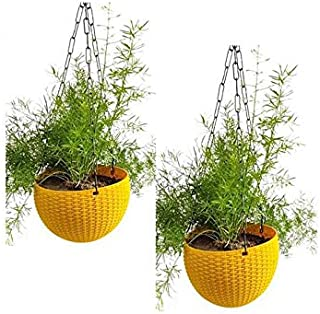 Airex Plastic Hanging pots for Plants and Flowers for Garden Balcony dŽcor -Pack of 2, Yellow
