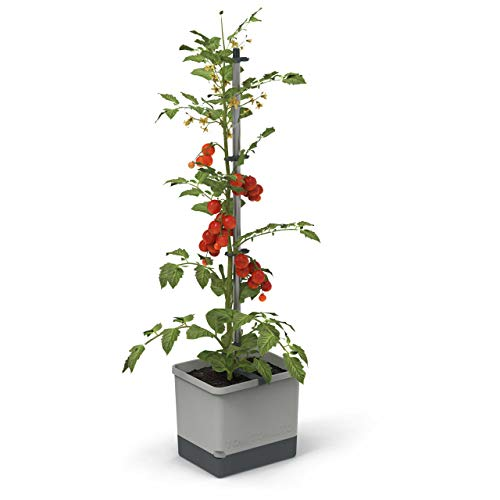 Tom Tomato - Tomatentopf - 4,5 L Wassertank Bewässerungssystem - Rankhilfe - Befestigungshaken - 20 L Erdvolumen - Kletterpflanzen - Pflanzkübel Pflanzgefäß Blumentopf Pflanzturm (Hellgrau)