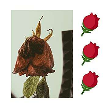 Punasii ruusuja