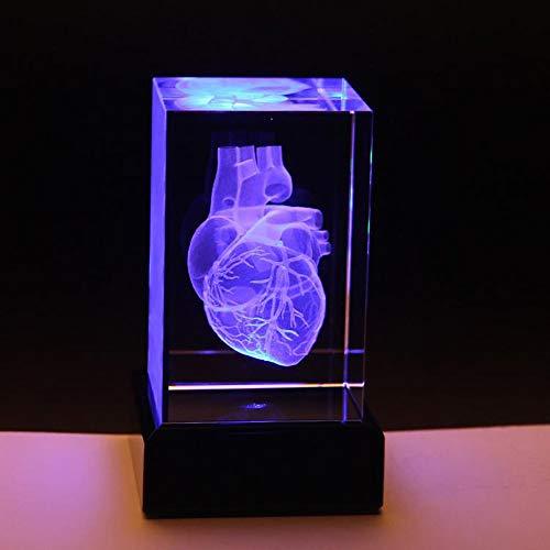 JJIIEE Modelo anatómico de corazón Humano 3D con Base LED, pisapapeles (Grabado con láser) en un Cubo de Cristal, Regalo de Ciencia, decoración de Escritorio, luz Nocturna USB, (3.9x2.4x2.4 Pulgadas)