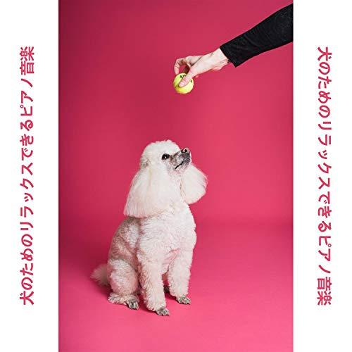 犬の耳の音楽