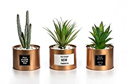 Small plants for motivation