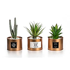 Opps Mini Artificial Plants Plastic Green Grass Cactus with Special Golden Can Pot Design for Home Décor – Set of 3