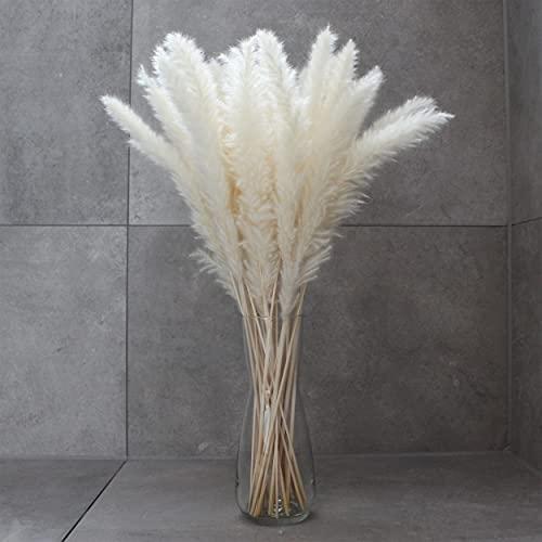 BATRIOZO® Pampasgras · Weiß (Creme) · 20 Stück - fluffige Wedel · Trockenblumen Bündel · Deko Wohnzimmer und Schlafzimmer