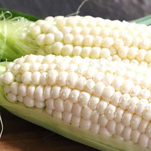 とうもろこし 幻の生で食べれる白いトウモロコシ ピュアホワイト 訳あり10本入り