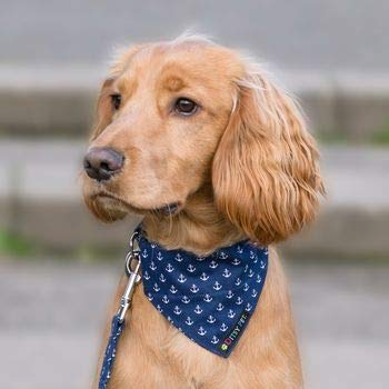 Ditsy Pet Marineblaues Hundehalstuch, Motiv: Ankermuster