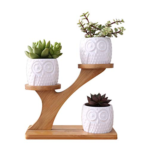 Junlinto, Leuke Uil Pot Succulente Cactus Planter Bloempot Set Met Bamboe Plank Decor