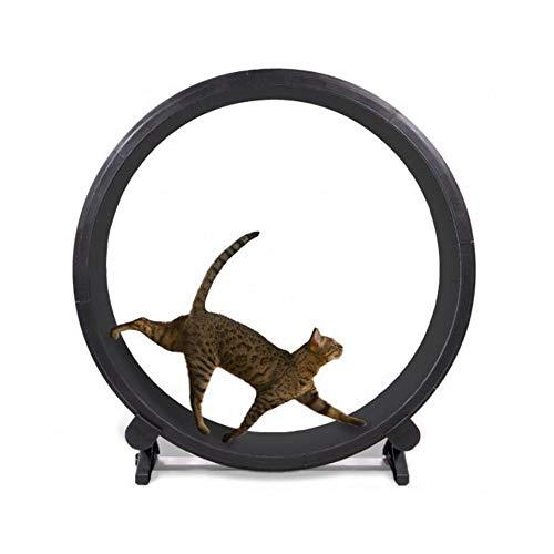 HYRL Roue d'exercice pour Chat Rouleau pour Chat Diamètre de la Roue de Course 1,2 mètre Parfait pour Votre Chat énergique