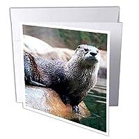 野生動物–Otter–グリーティングカード Set of 6 Greeting Cards