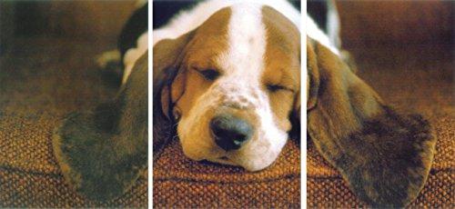 Close Up Postkarten-Puzzle Schlafender Basset (0cm x 0cm)