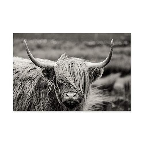 Nativeemie Blanco y Negro Scottish Highland Yak Lienzo Pintura Animales Carteles e Impresiones nórdicos Cuadros artísticos de Pared decoración para Sala de Estar 70x100cm / 27.6'x39.4 sin Marco