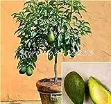 5 Pz Bonsai Avocado Delicious Dolce Fruit Tree Facile da Coltivare per la Verdura Giardino della casa Organic Pianta in Vaso Regalo per i Bambini: f