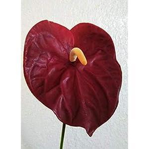 27″ Anthurium Stem. Silk Flower Floral Arrangements Tropical Hawaiian Flowers Red Color – Artificial Flowers #FWB01YN